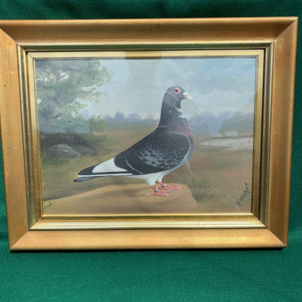 WWII Carrier Pigeon Portrait, Webb-Foot, Mr. Dixon signed G. Wiltshire