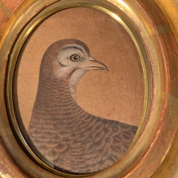 Persian Watercolor Portrait of a Partridge