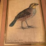 image of Persian Watercolor Portrait of a Partridge